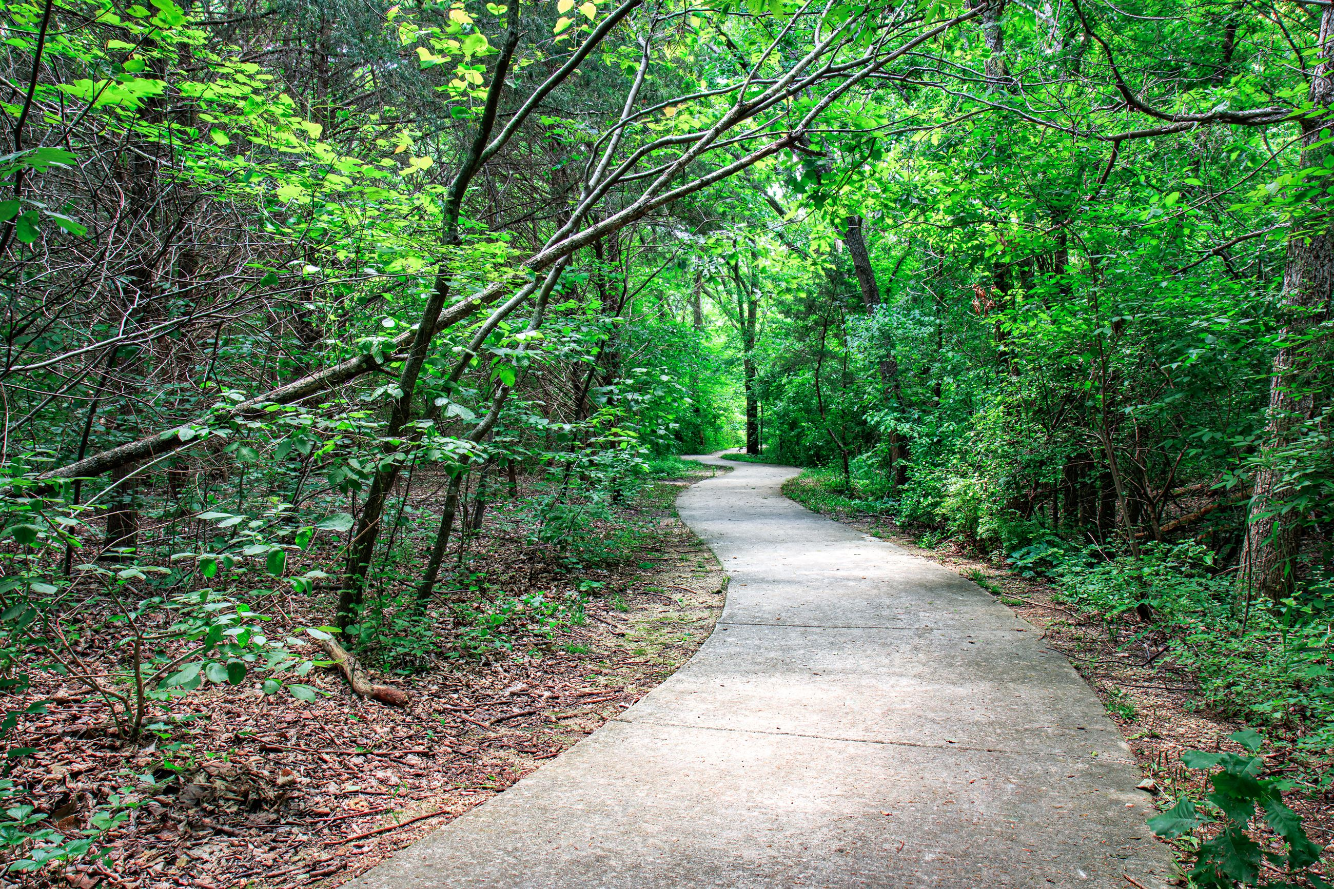 Spring Creek Forest Trail, concrete path, green trees all around.